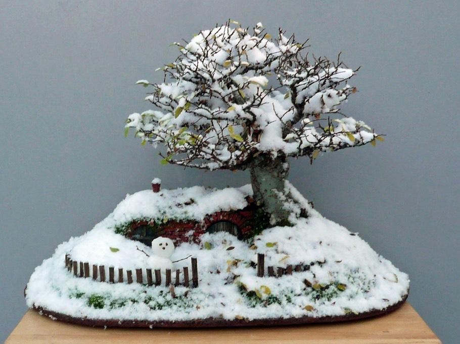 6-bag-end-bonsai-winter-dec-2009