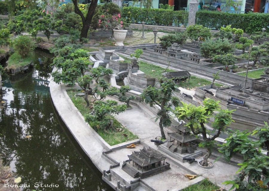 Bonsai biljke