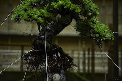 azumamakoto-powerplant-bonsai-2