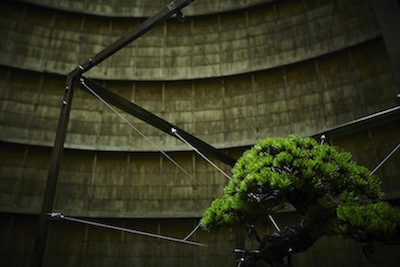 azumamakoto-powerplant-bonsai-3