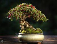 mikro bonsai