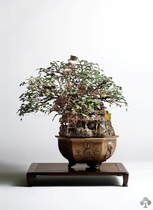 cudni bonsai