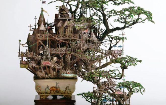 ludi bonsai