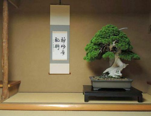 Sve što niste znali o bonsai drveću