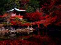 japanese-garden-night-642x481