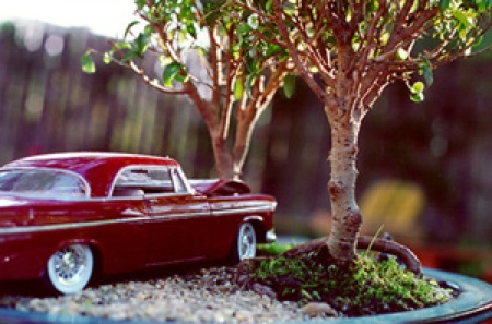 car-crash-bonsai-3