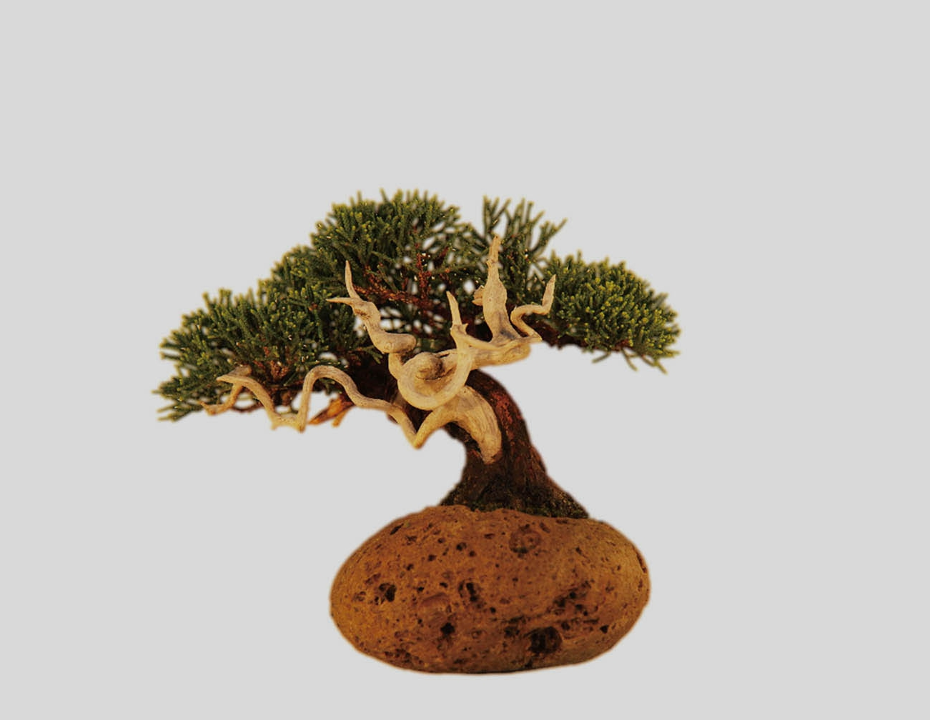 bonsai_hero4_1453743755