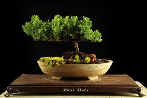 drvce, poklon ideje za rodjendan