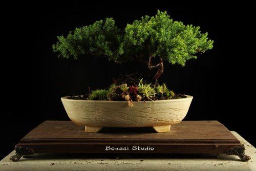 Bonsai, poklon ideje