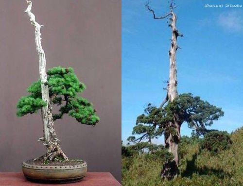 Veliko drveće kao inspiracija