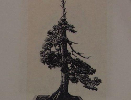 Pola veka oblikovanja drvceta