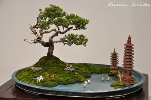 juniper-bonsai-7-1024x680