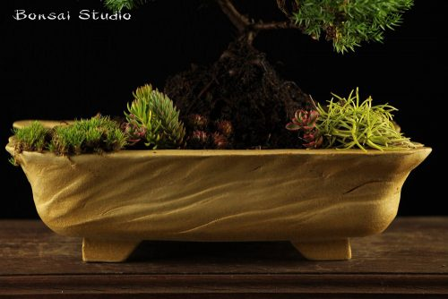 Detalji, posuda za bonsai