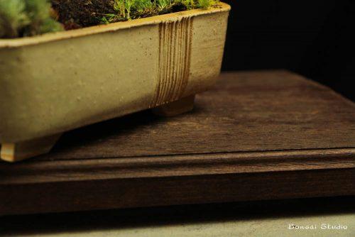 poklon ideje bonsai drvo