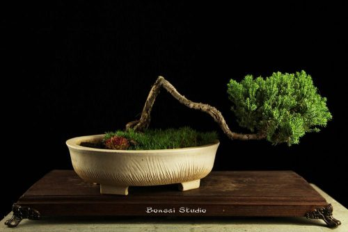 Kaskadni bonsai