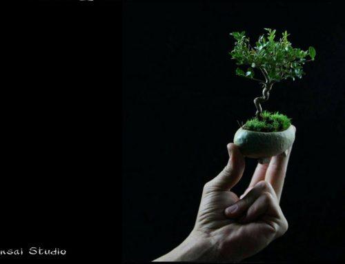 Kolekcija mikro bonsai je dostupna
