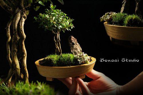 Zimzeleno drvce