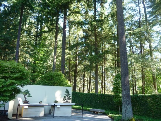 kolekcija bonsai drvca