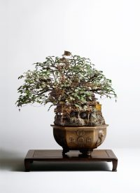 1_Aiba_Bonsai-A_view11
