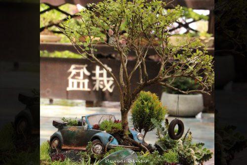 buba volkswagen i bonsai